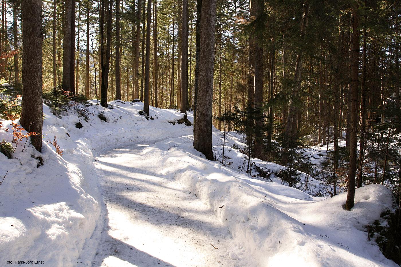 GUT GESPURT Wandern oder spazieren auf geräumten Waldwegen am Eibsee.
