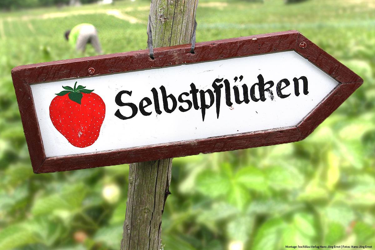 Erdbeeren-Reportage: Schild Selberpflücken