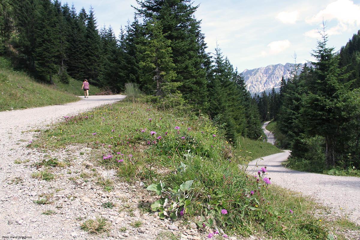 WANDERLUST Viel Natur und gut ausgebaute Wanderwege laden zu Touren zu Fuß oder mit dem Fahrrad ein. Wer früh am Morgen aufbricht, der hat die ganze Naturgewalt noch fast für sich allein. | Foto: Hans-Jörg Ernst