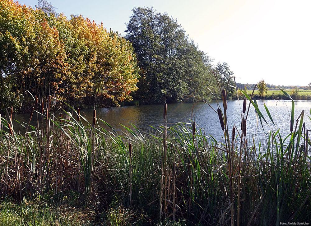 Die Entlastungswoche verbrachten wir in schöner Natur. Bestandteil waren auch lange Spaziergänge, wie hier am Haunberg See.